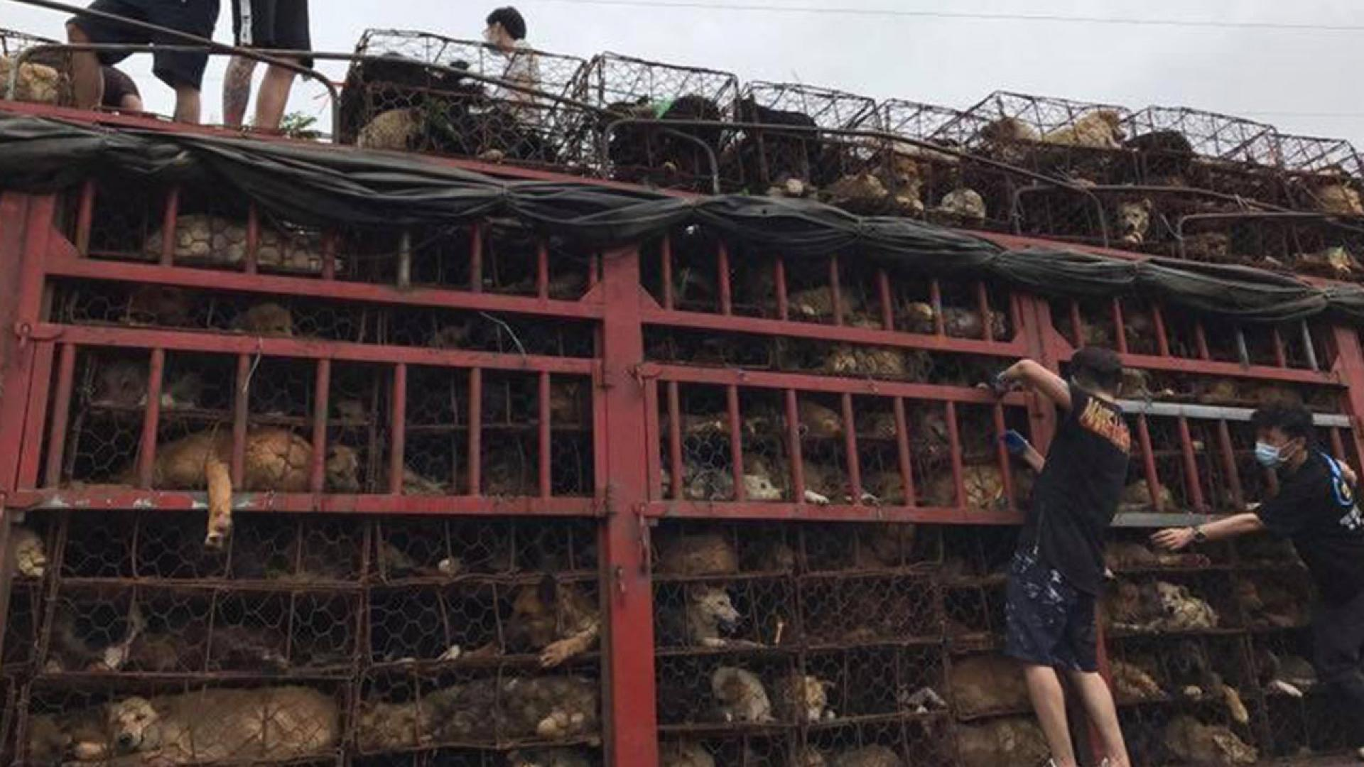 No Dog Left Behind recused 79 dogs from China