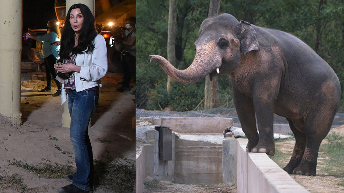 """Cher helped the """"world's loneliest elephant"""" arrive at his new sanctuary in Cambodia."""