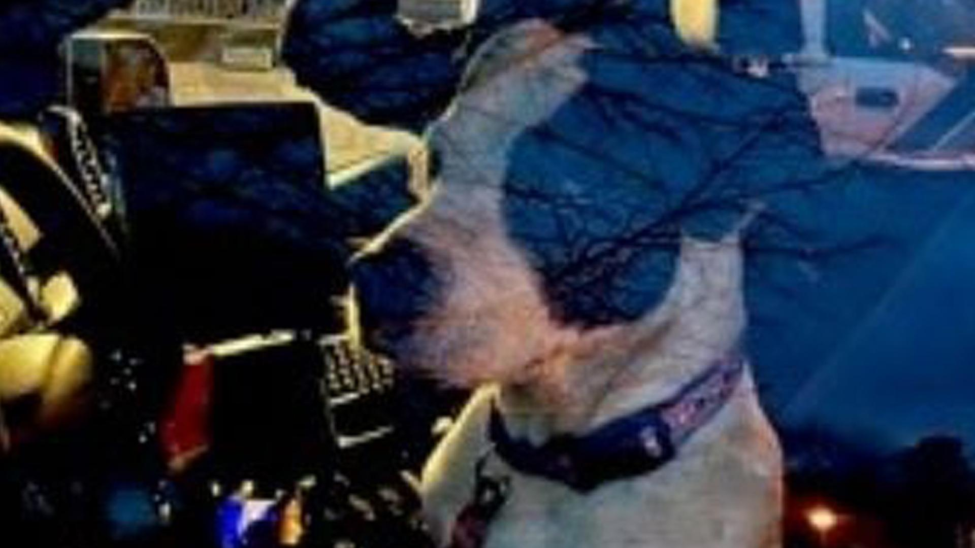 Fred Rapp's dog helped lead an off-duty cop to where his owner was