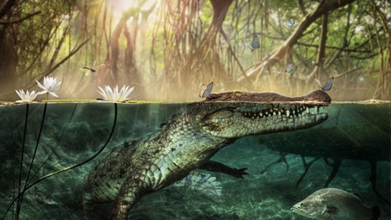 Image of crocodile underwater