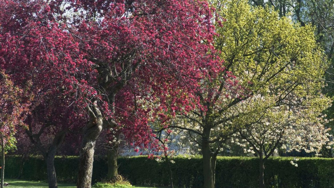 Trees blooming in the springtime