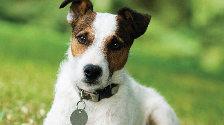 Stock image of dog.