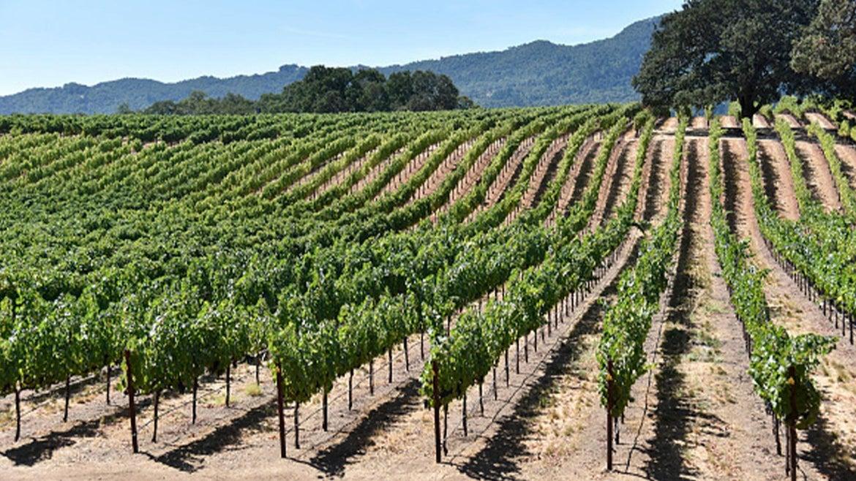 Photo of Sonoma wine country.