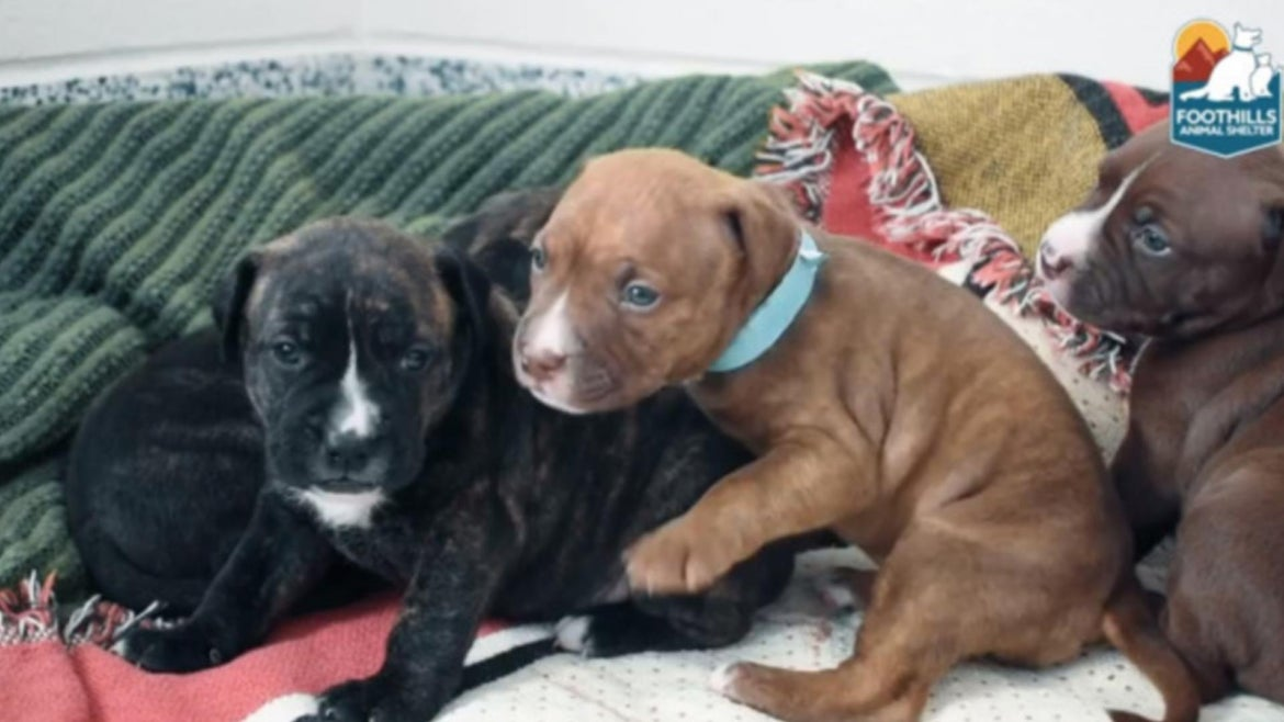 A Colorado animal shelter helped reunite a Pitbull who was found wandering alone in freezing temperatures with her lost puppies.