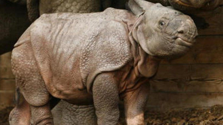 Baby Rhino in Nepal
