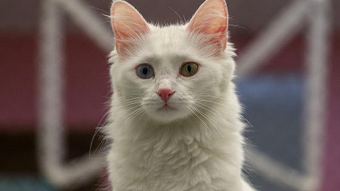 A stock image of an adorable cat.