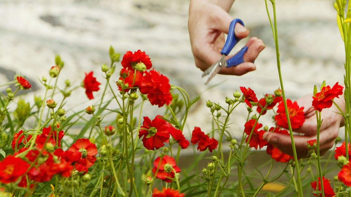A worker arranges a display during preparation for the annual Chelsea Flower Show on May 21, 2004 in London, England.