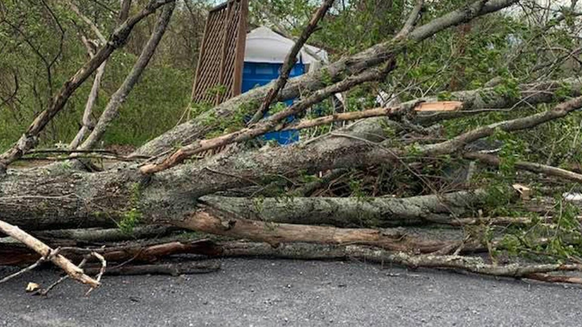 Photo of fallen tree on the port-a-potty.