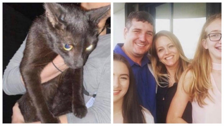Binx, the cat found in the Miami condo collapse rubbish, and his family