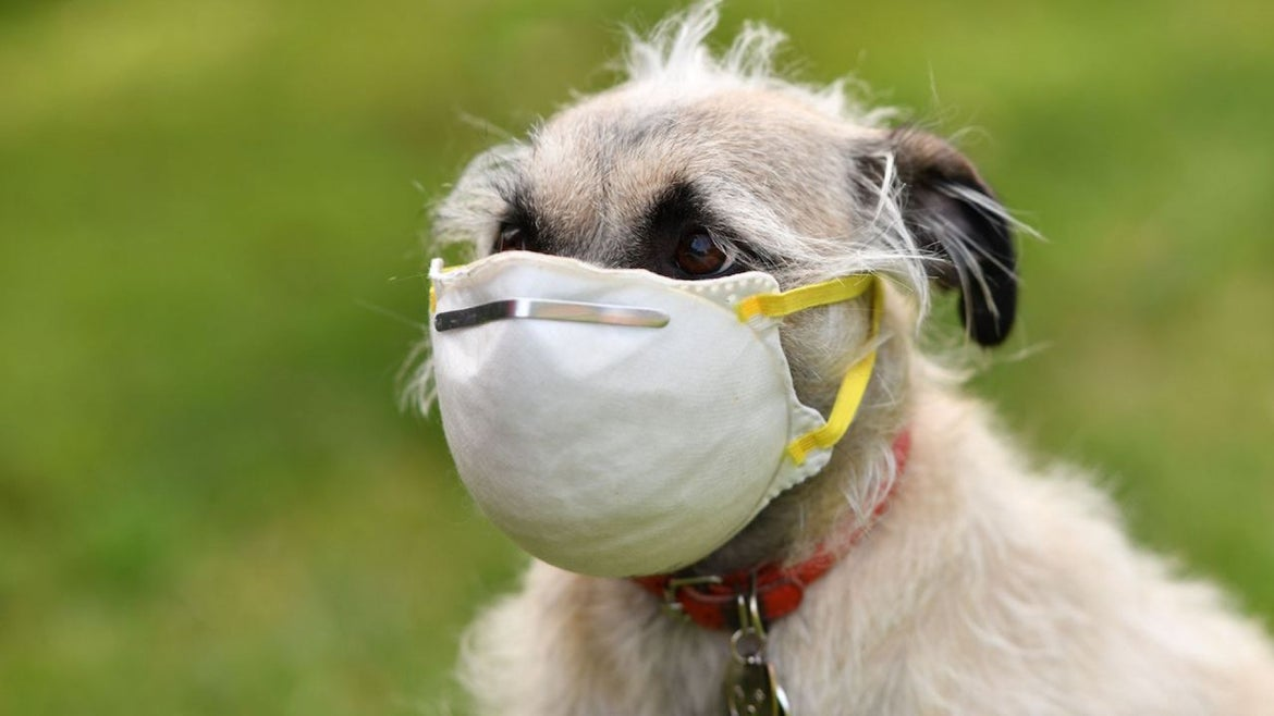 An illustration photo shows Ziggie the dog wearing a mask put on her face by her owner in Los Angeles, on April 5, 2020