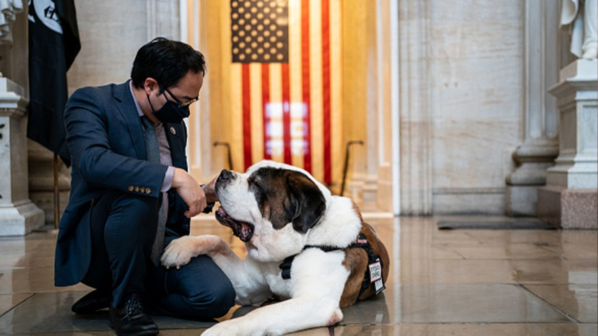 Rep. Andy Kim (D-NJ) pets Officer Clarence, a Saint Bernard with the Greenfield (Mass.) Police Department in the Rotunda of the U.S. Capitol Building on Thursday, April 15, 2021 in Washington, DC.