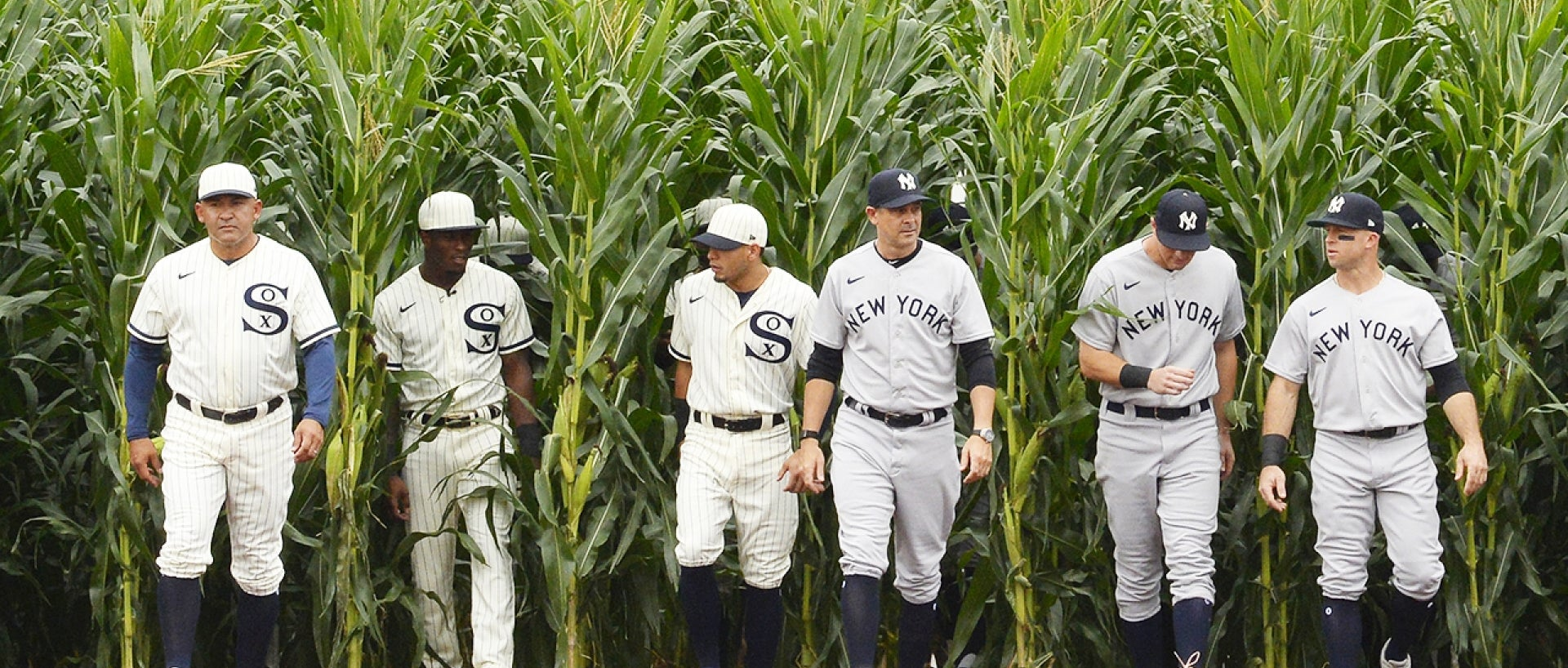 """The Yanks and White Socks enter the """"Field of Dreams"""" game by way of the cornfield."""