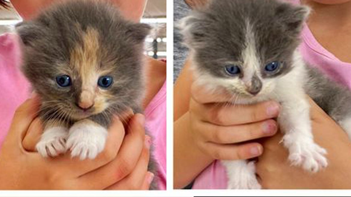 Kittens being held by hands