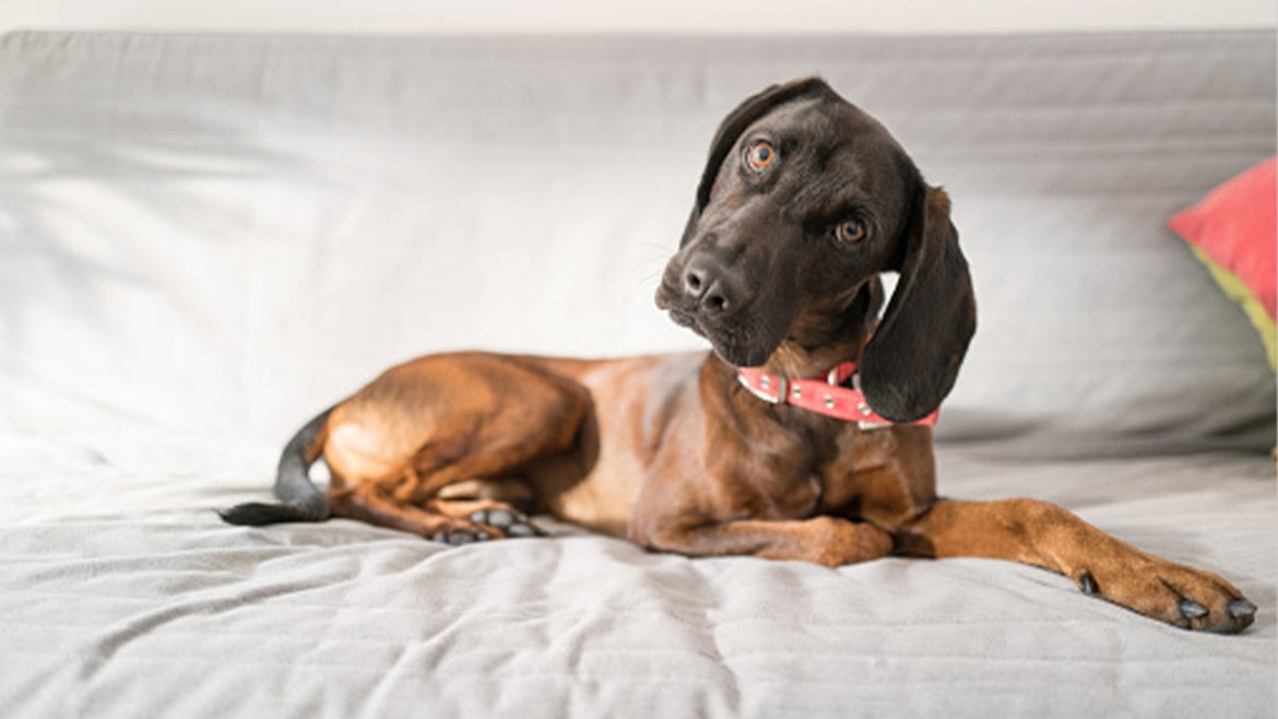 A stock image of a dog.