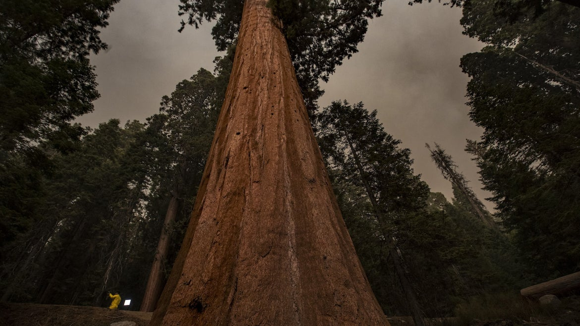 September 17, 2021: A news crew, left, is dwarfed by a giant sequoia in Lost Grove as smoke haze from the KNP Complex fire fills the sky on Friday, Sept. 17, 2021 in Sequoia National Park, CA.