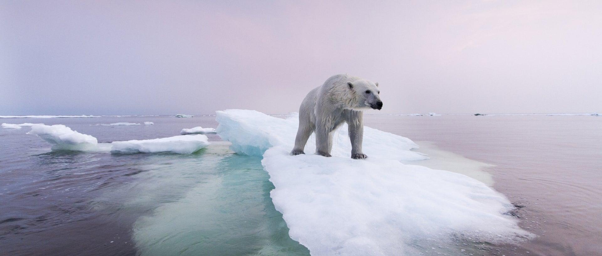 Polar bear on ice chunk