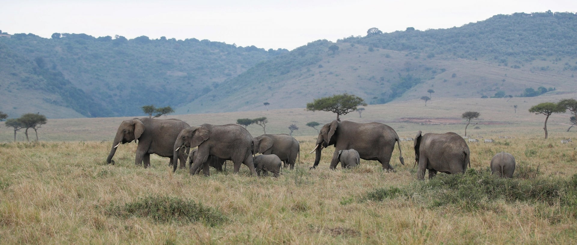 A photo taken on Aug. 30, 2021 shows some of the new baby elephants accounted for in the recent census.